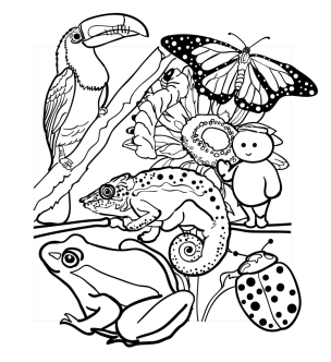 kleurplaten allerlei dieren clarinsbaybloor